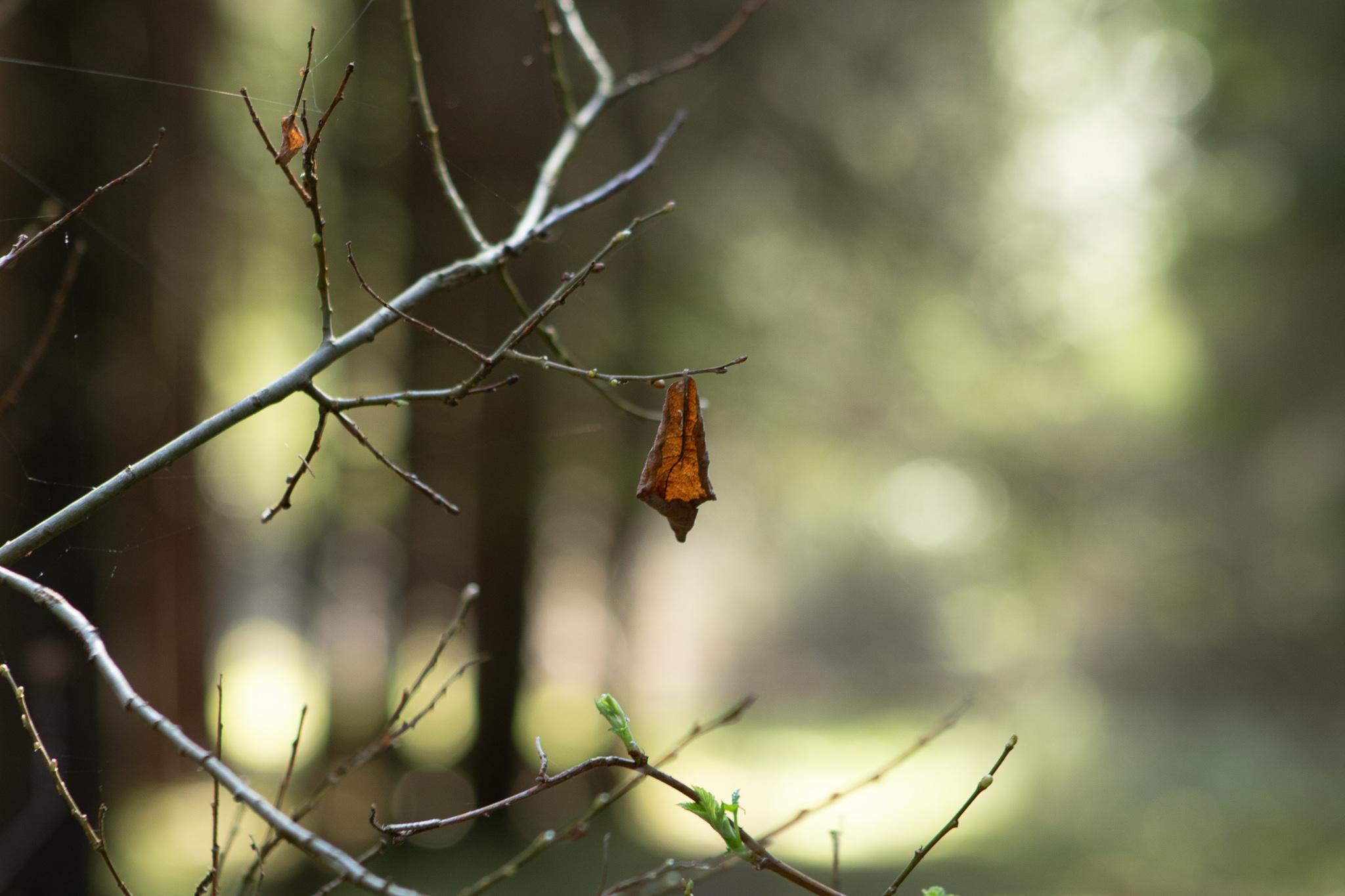 Последний лист осени
