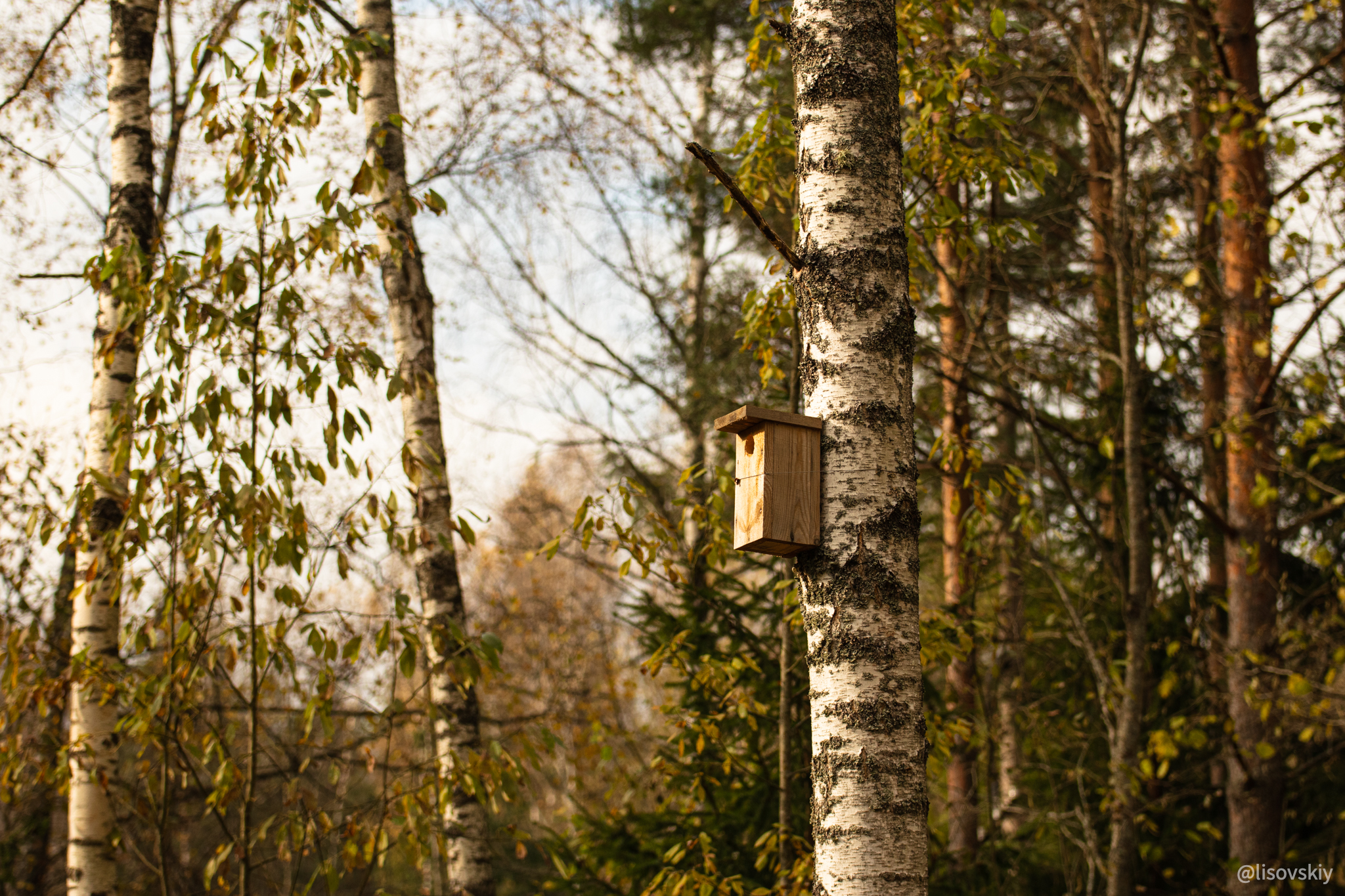Весна, Березинский биосферный заповедник, Беларусь